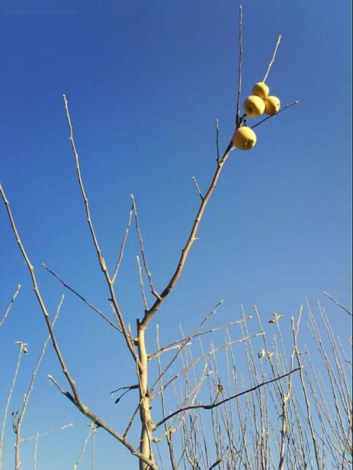 دل به پاییز نسپرده ایم