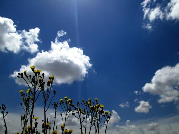 soltanieh yellow flower cloud
