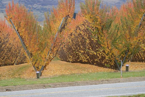 Autumn in central otago