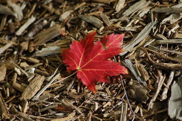 Leaf, Fall Colors