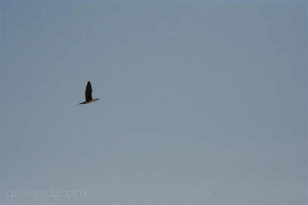 Alone in the Sky