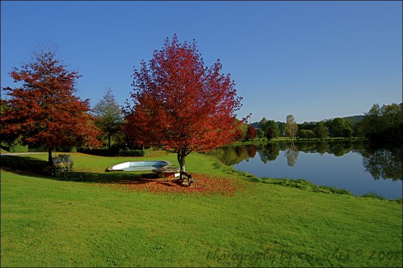Couleurs d'automne arbre rouge