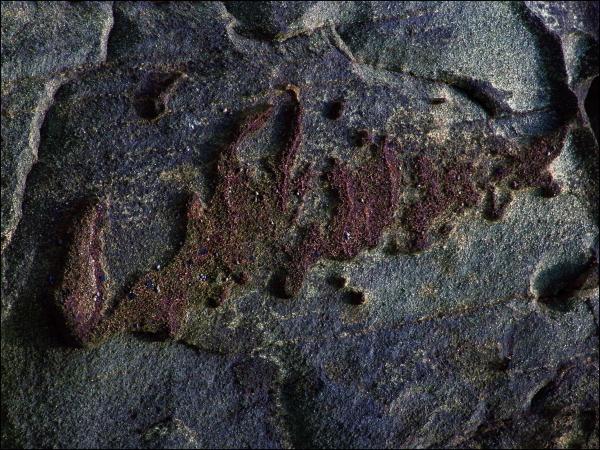 grenats rouge schiste bleu glaucophane groix
