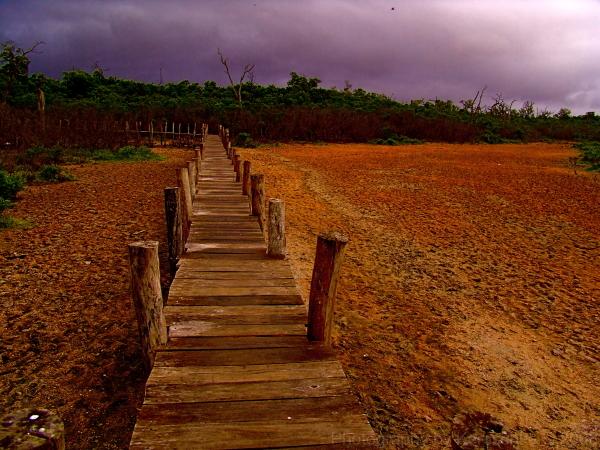 bridge pont sur une réserve naturelle