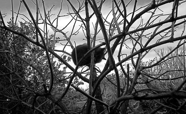 Le chat dort dans un arbre