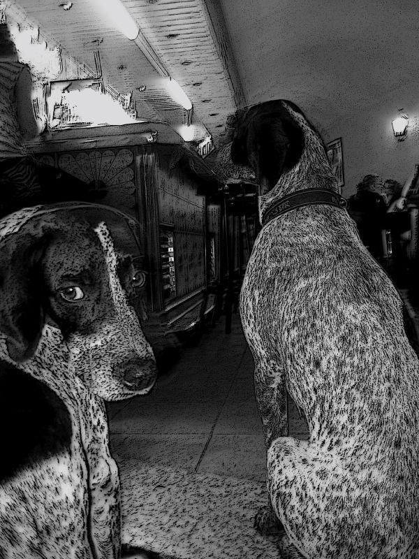 Dog's in Barcelona