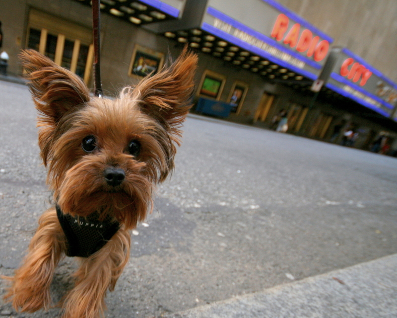 Dogs I Have Met®: New York City