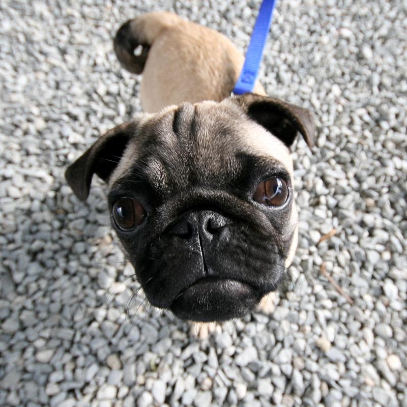 Dogs I Have Met®: Winkin Field, Bangor