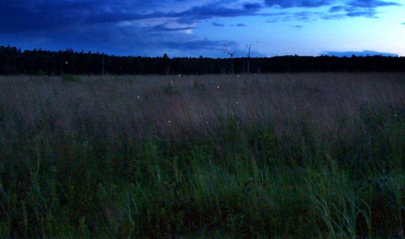 Fireflies, Harrington, Maine