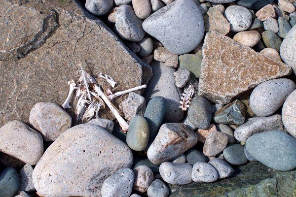 Bones and Stones