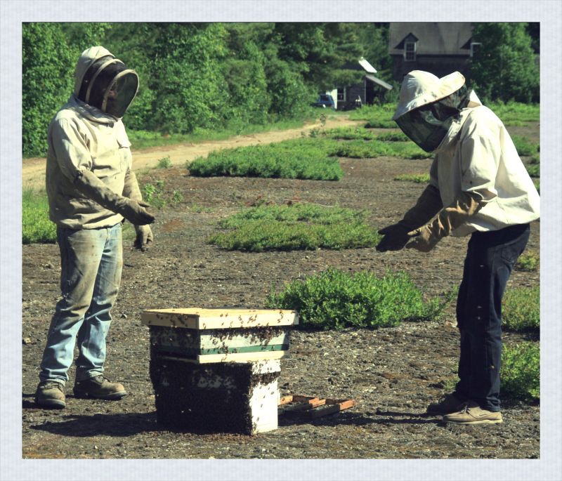 People at Work: The Beekeepers