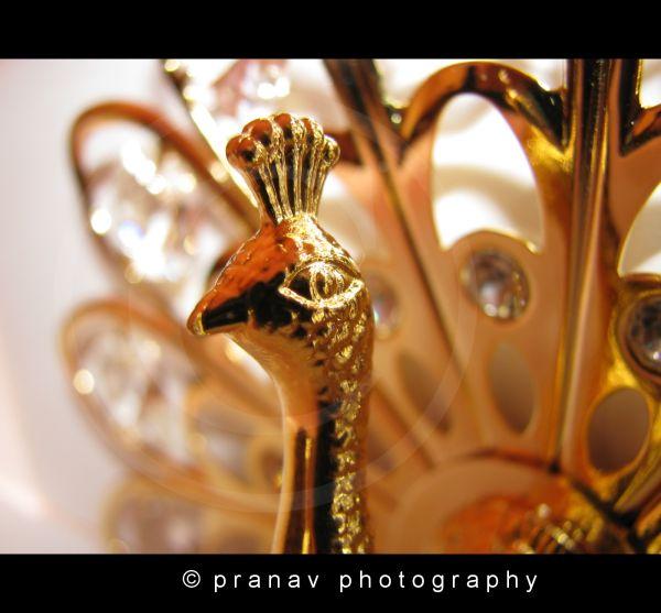 Beautiful Golden Peacock