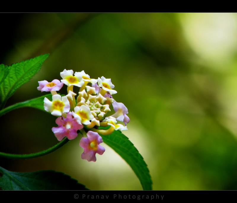 beautiful flower bokeh