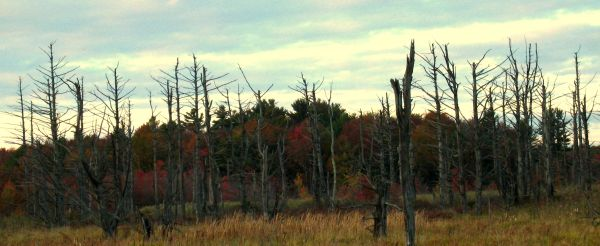 Colors on a dry landscape