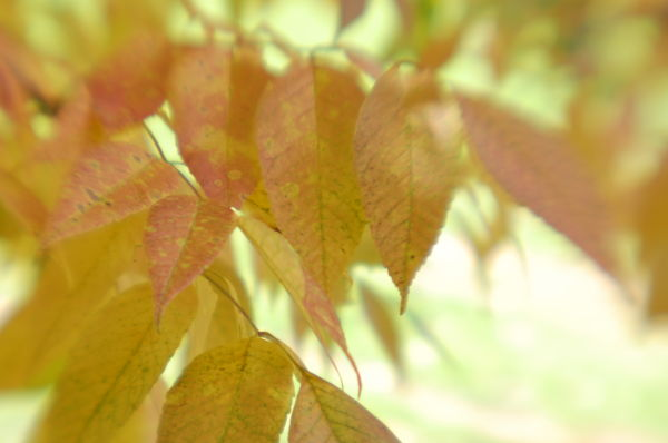 Lensbaby Leaves