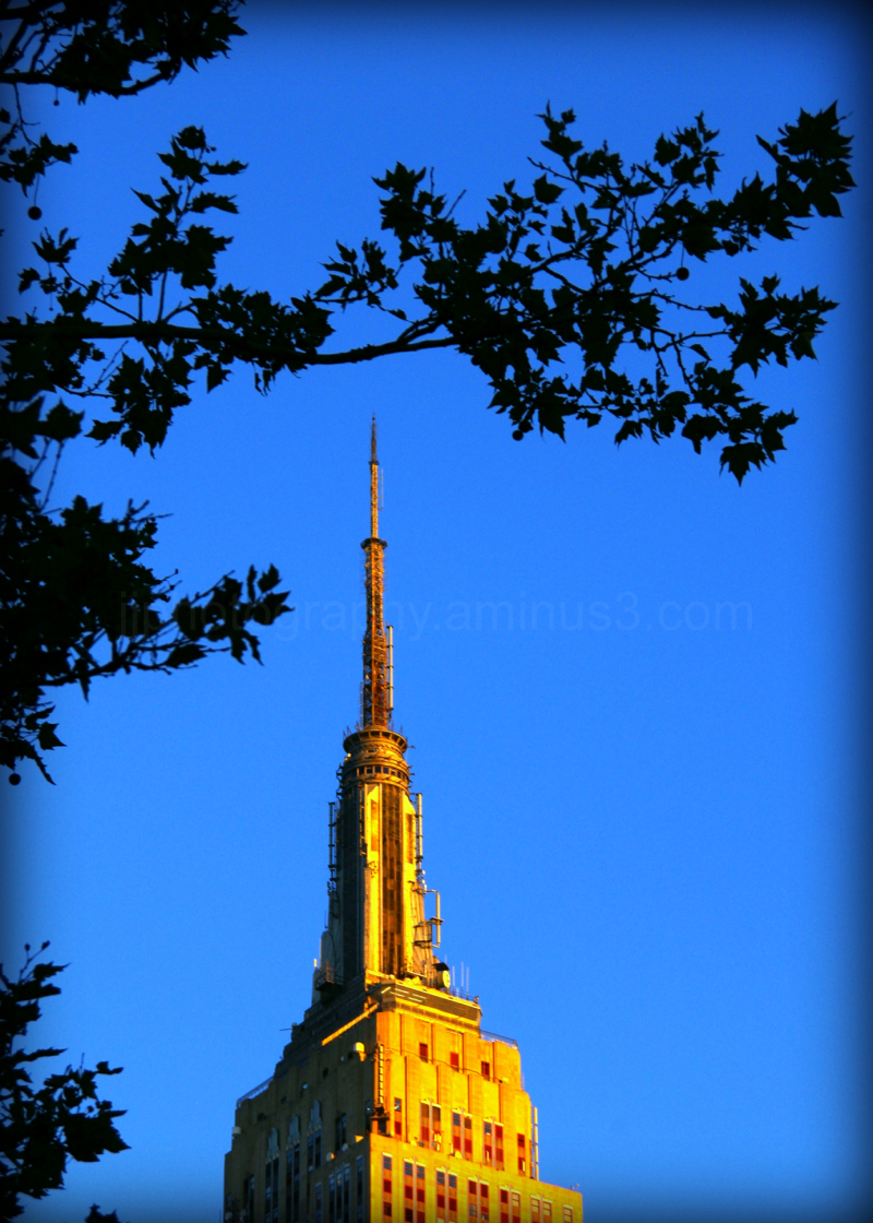 Empire state building through trees