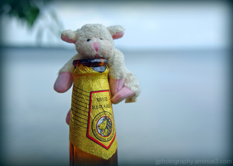 A sheep having a beer