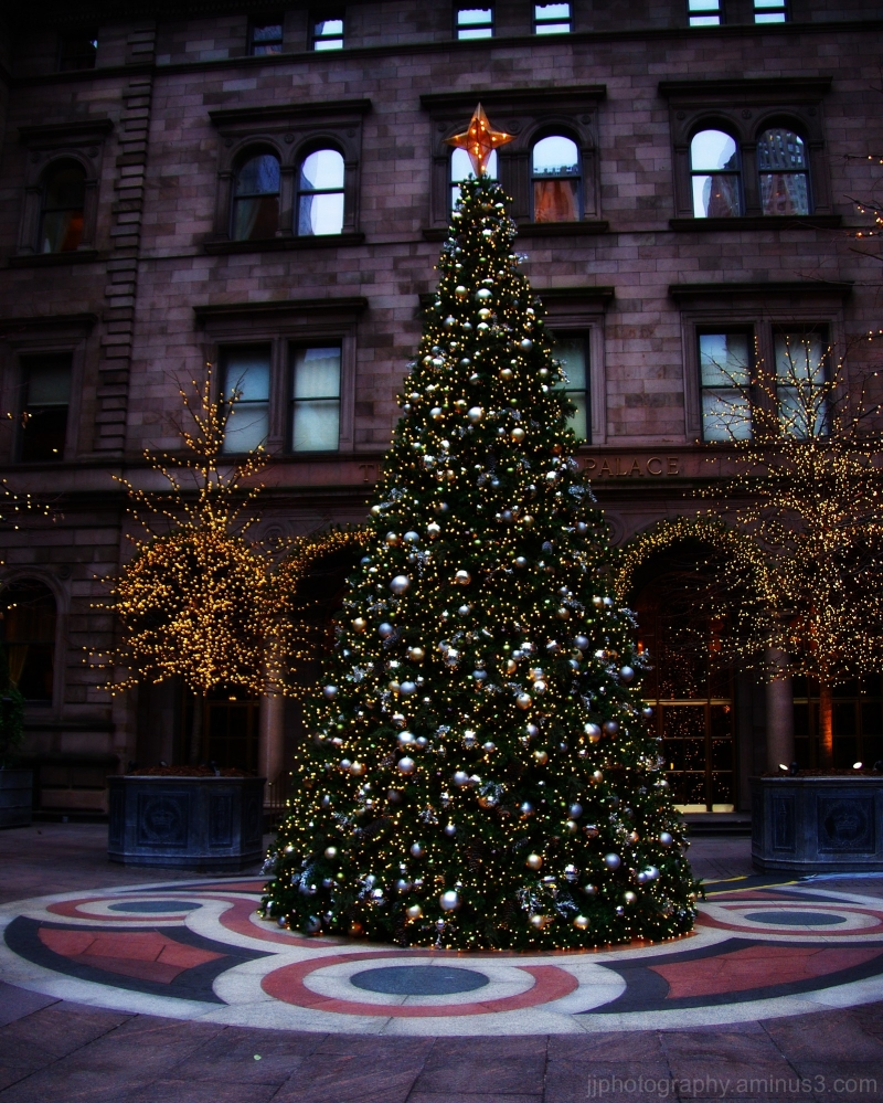 New York Palace tree