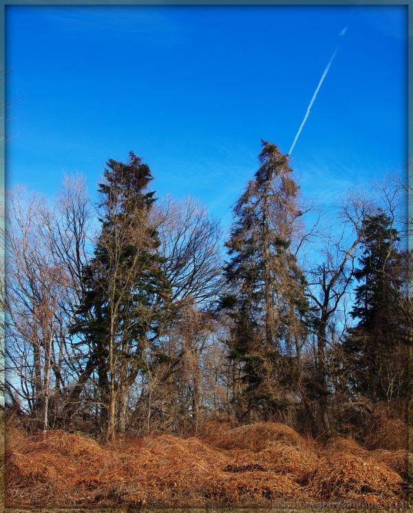 blue skies and brown trees