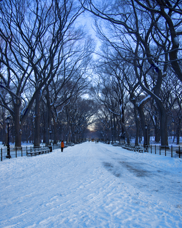 Looking down the Mall in Central park