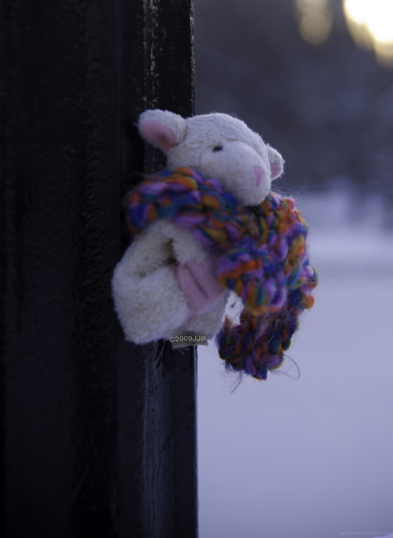 Little sheep with a scarf