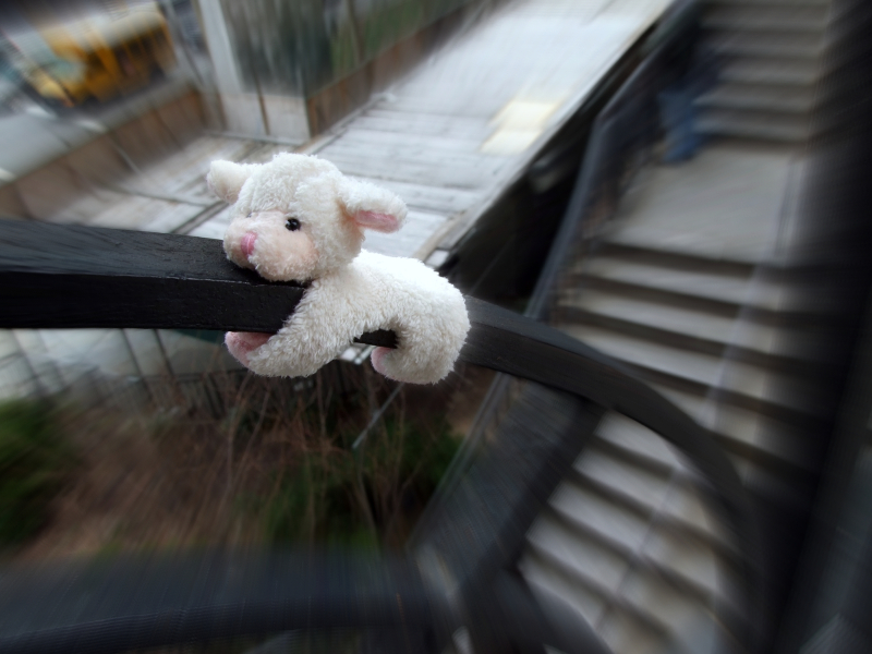 Sheep sliding down a rail