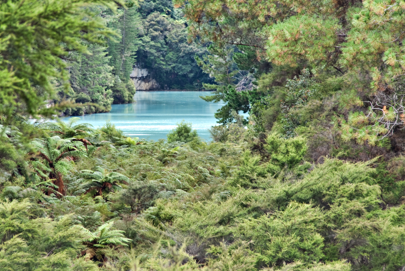 A lake through the ferns and forest