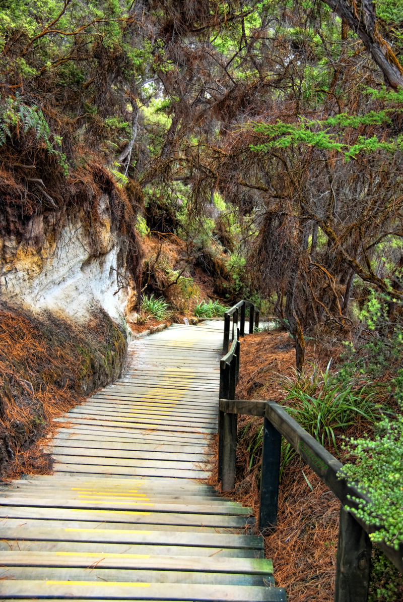 A path leading through a geothermal park