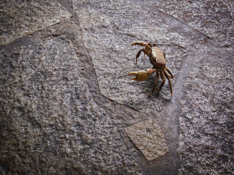 A crab - protest against the BP disaster
