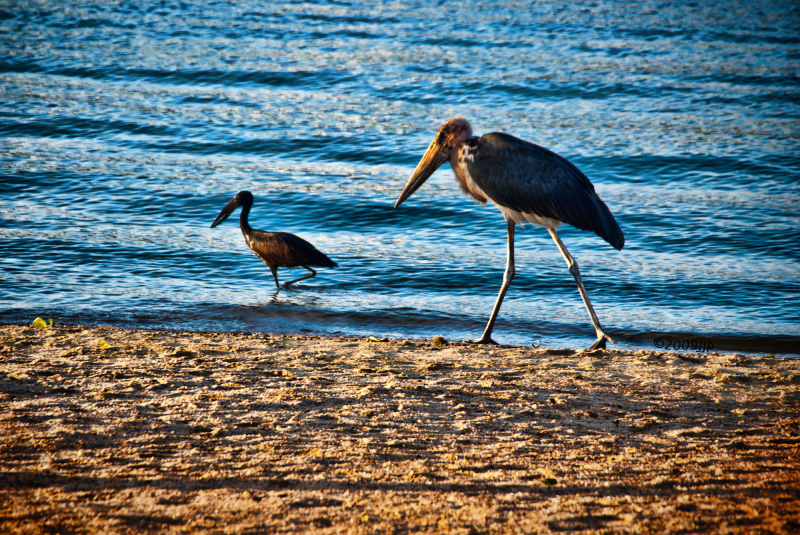 A couple of birds by the shore