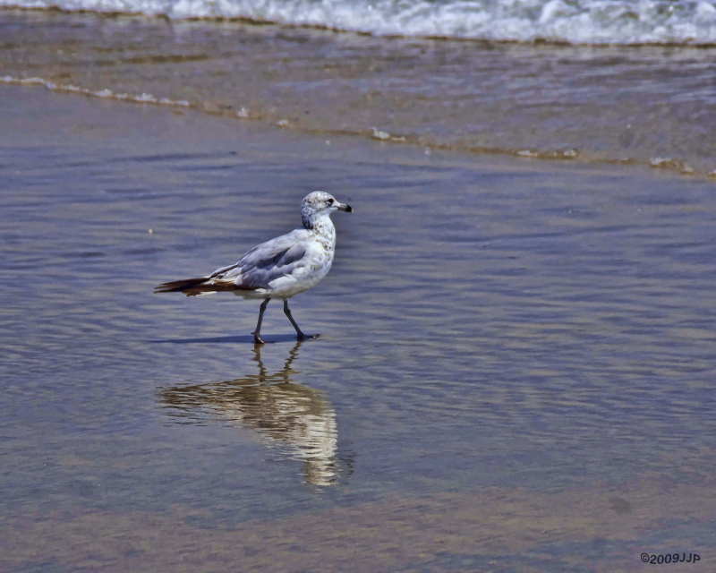 A gull enjoying the beach