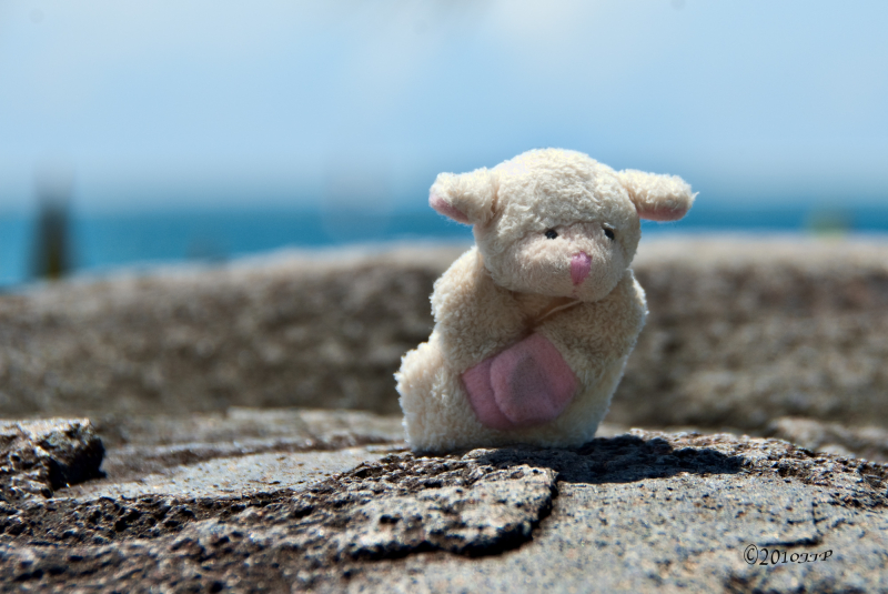 A sheep toy by the sea