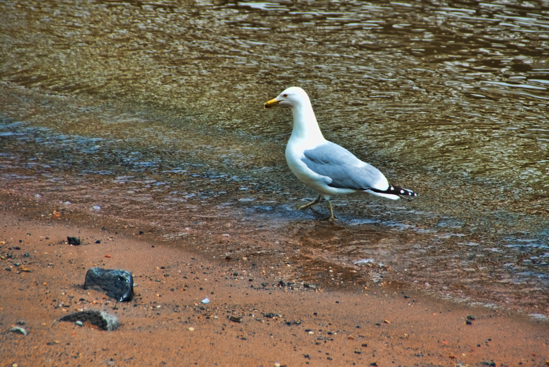 A gull on the shore