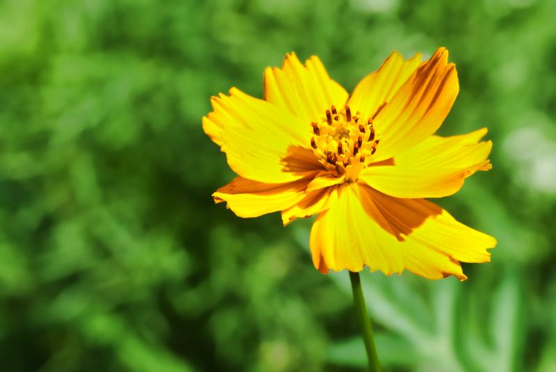 An orangy flower