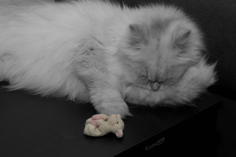 The cat an soft toy sleep soundly
