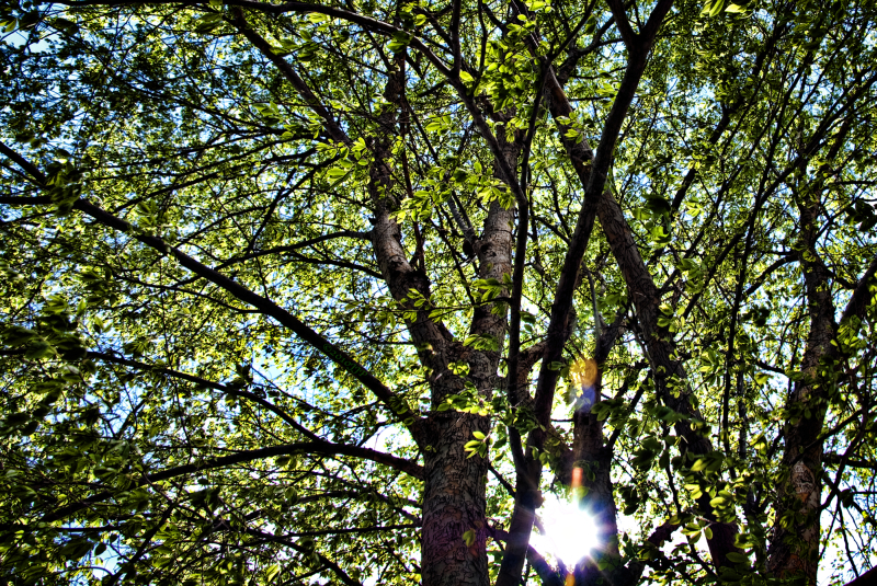 The light breaking through the branches