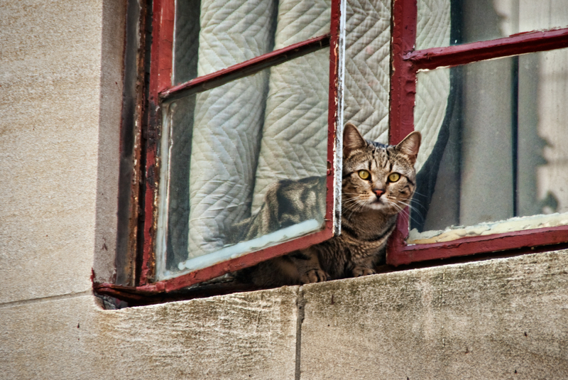 A cat looking out a window
