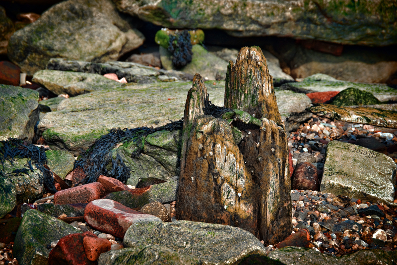 Worn wood and rocks
