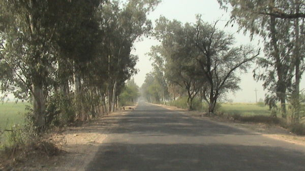 Road view in morning hours in countryside
