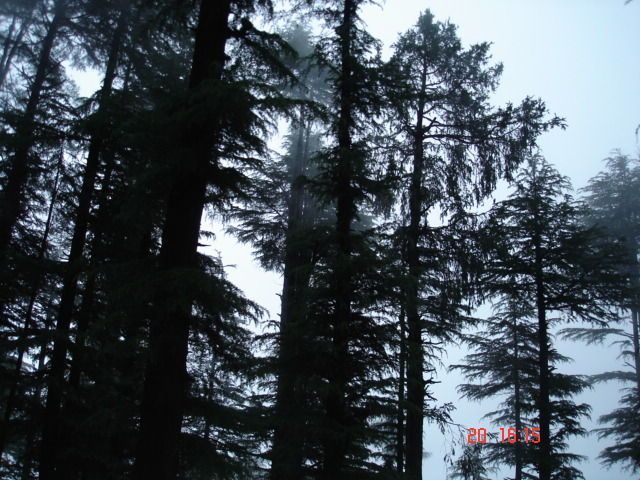 Morning view of forest