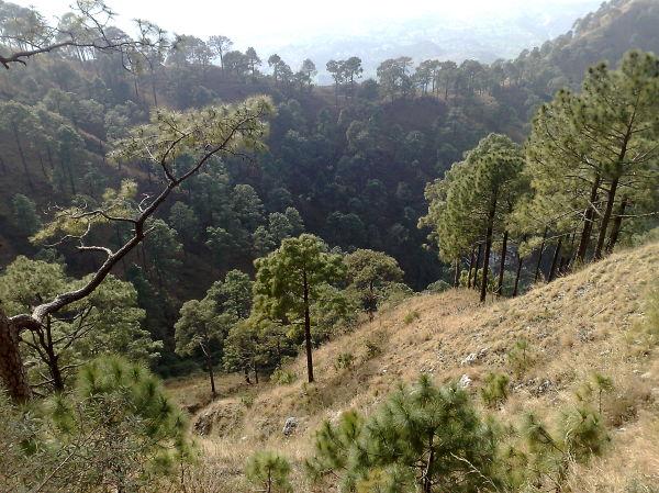 Valley full of trees