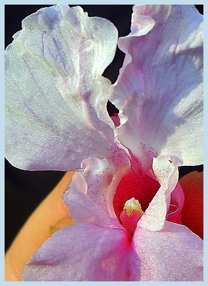 Close up from a flower