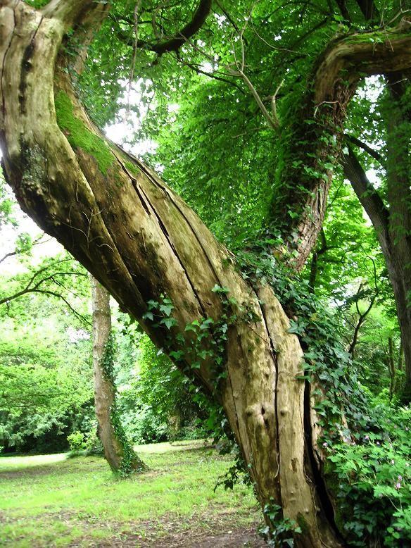 torsade arbre