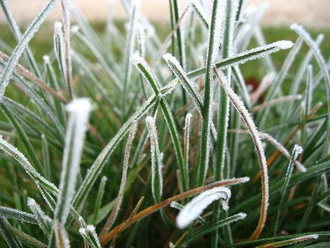 pelouse hiver givre vert