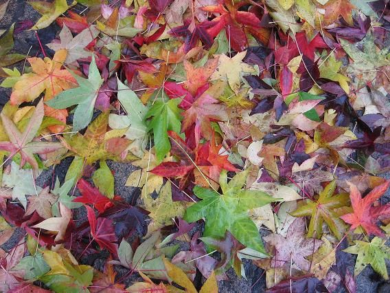 feuilles couleurs automne