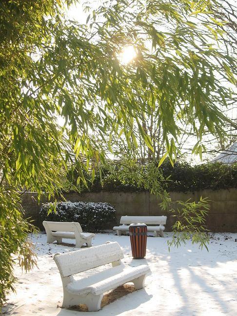 banc sous la neige soleil bambou