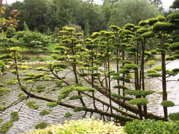 Parc de Maulévrier japon bonsaï