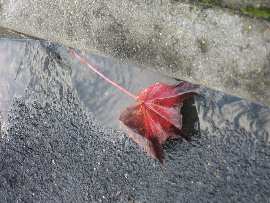 feuille rouge dans le caniveau chinon