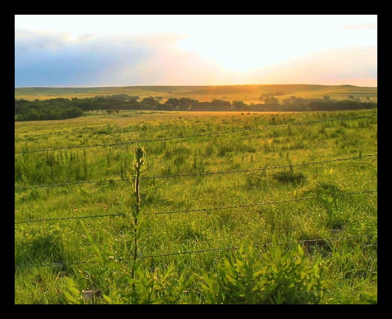Sunrise on the Tall Grass Praire, Flint Hills, KS