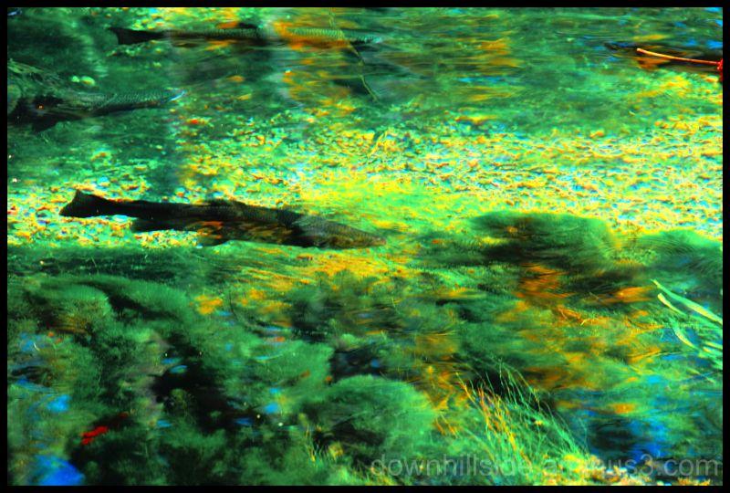Denizens of the Deep  (HDR)